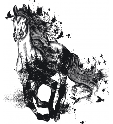 Kůň - nespoutaný sen